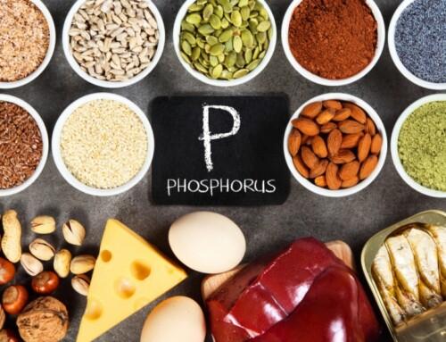 Le rapport protido-phosphorique