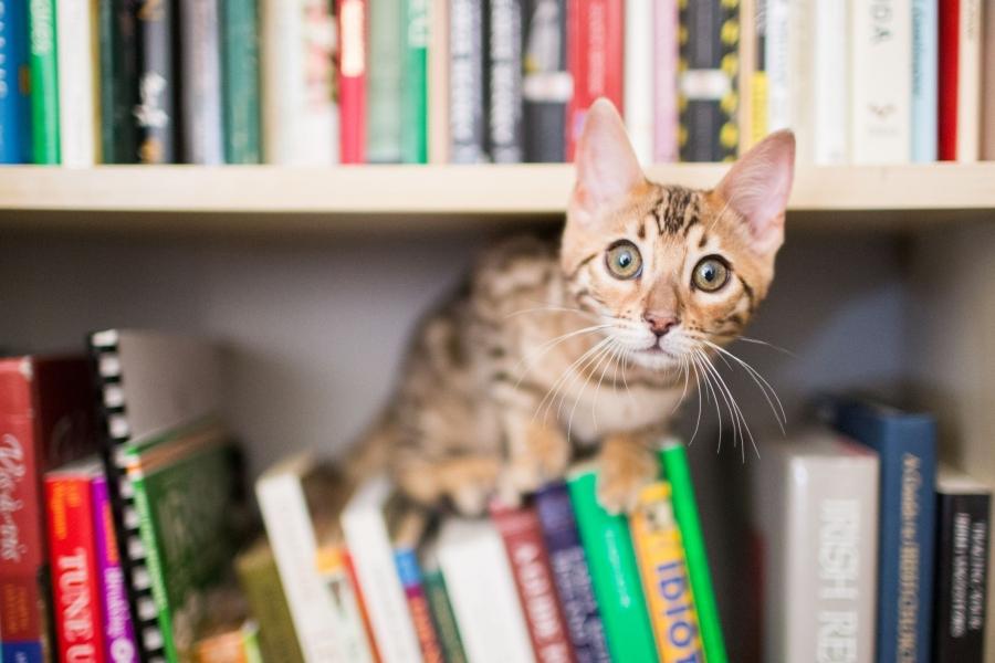 Livres de référence sur l'alimentation du chien et du chat