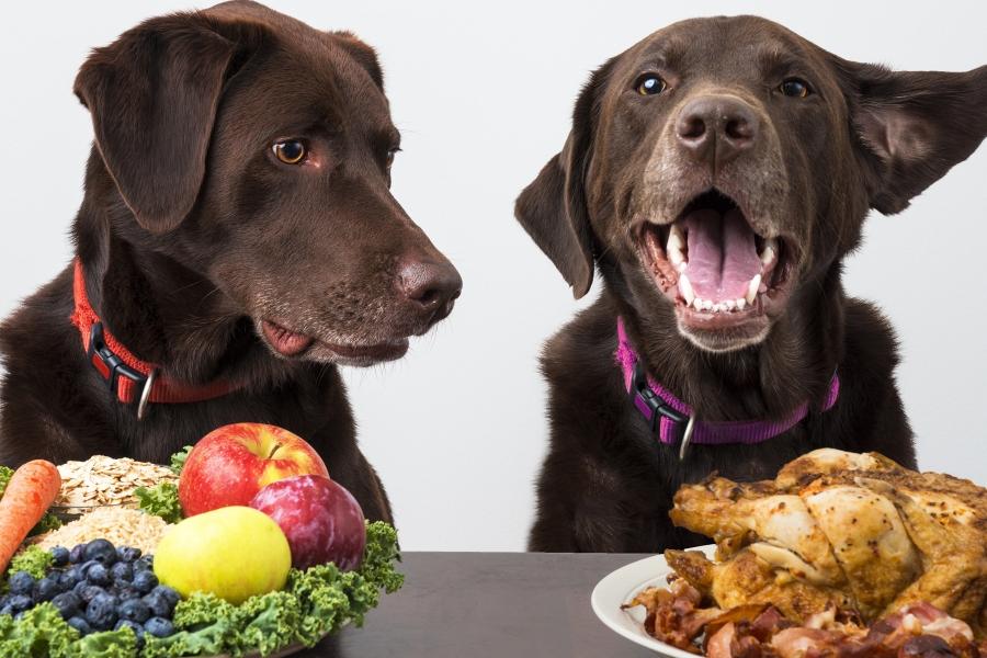 Protéines animales et végétales chien chat