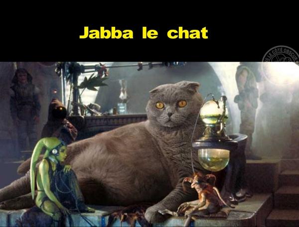 Jabba le surpoids chez le chat
